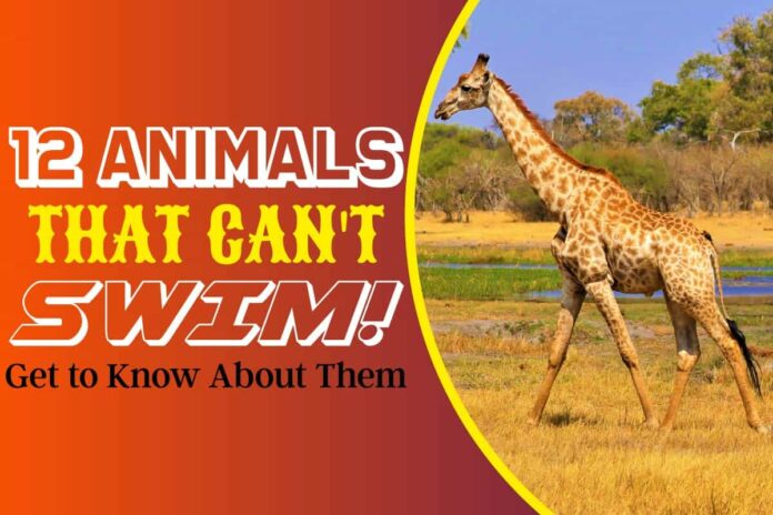 12 Animals that Can't Swim