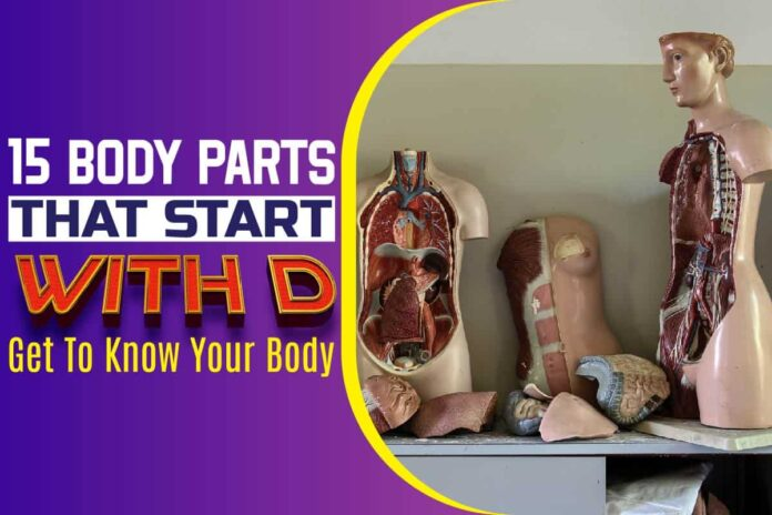 15 Body Parts that Start with D