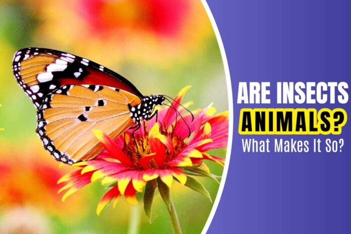 Are Insects Animals