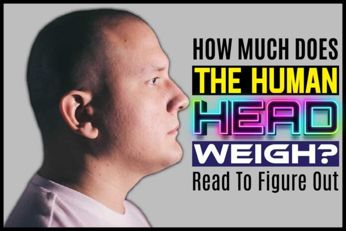 How Much Does The Human Head Weigh