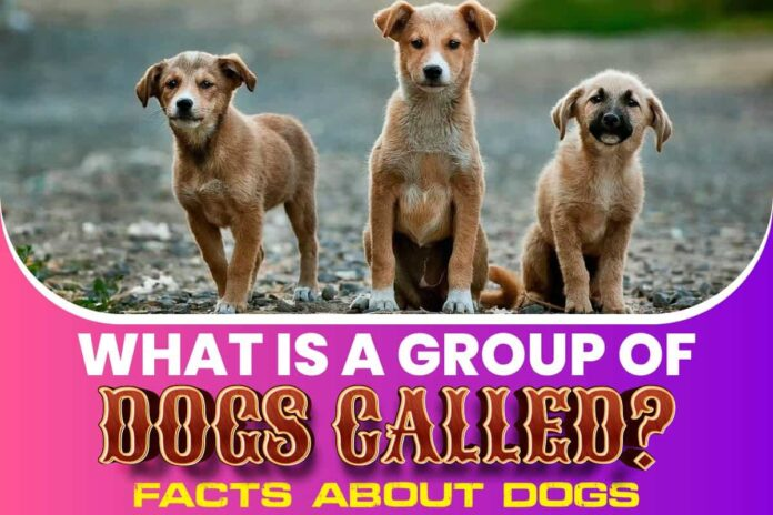 What Is a Group of Dogs Called