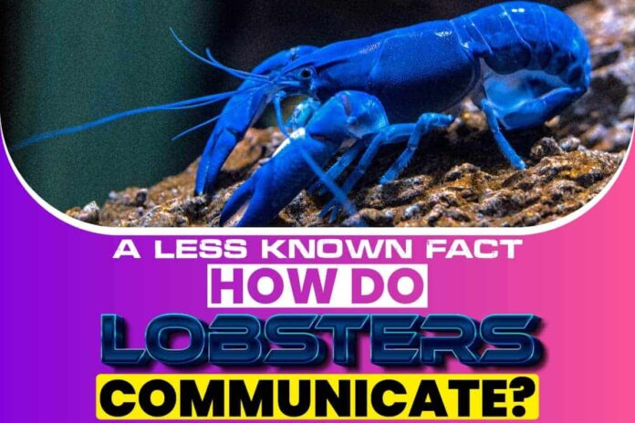 A Less Known Fact How Do Lobsters Communicate