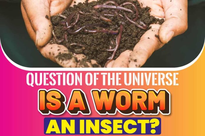 Question of the Universe Is a Worm an Insect