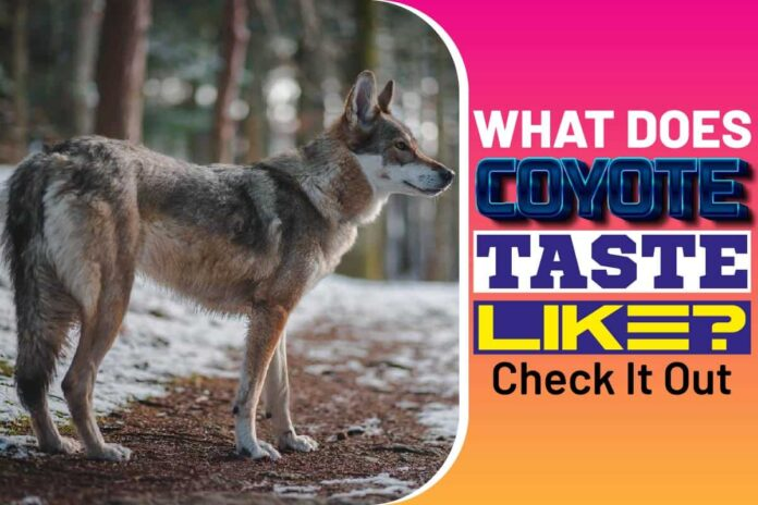 What Does Coyote Taste Like..